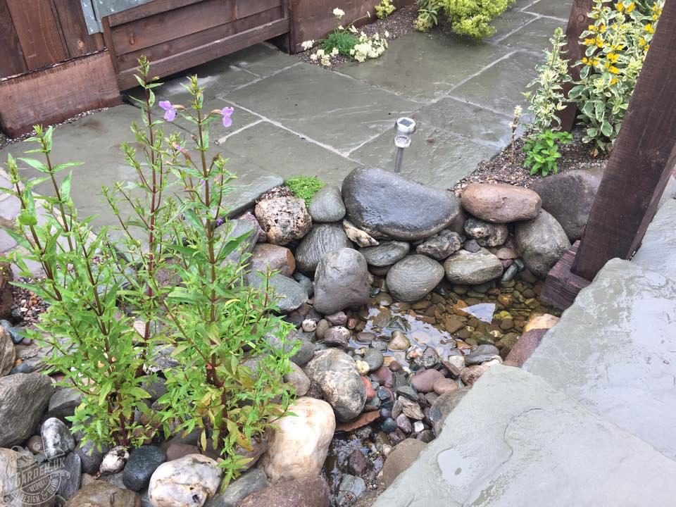 pond bed